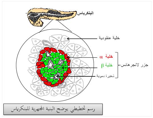 آليات التنظيم على مستوى العضوية التنظيم الهرموني هرمون القصور