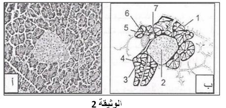 2as S علوم الطبيعة والحياة آليات التنظيم على مستوى العضوية